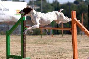 Vybavení na psí agility
